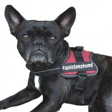 #assistenzhund Klettlogo