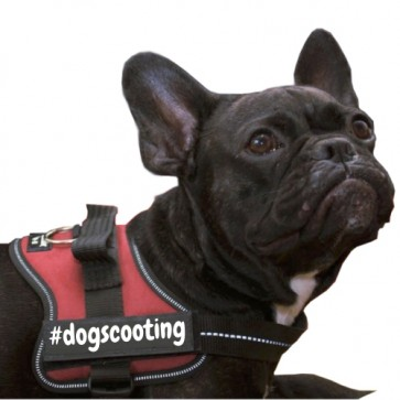 #dogscooting Klettlogo