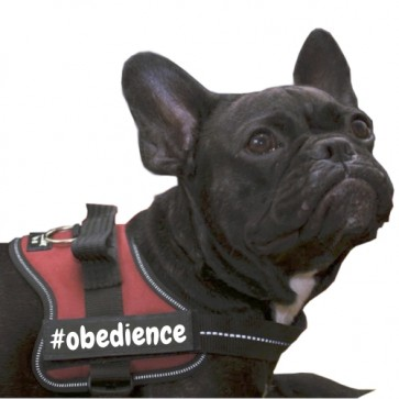 #obedience Klettlogo