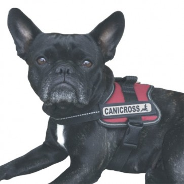 Canicross 1 Klettlogo