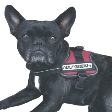 Rally-Obedience Klettlogo