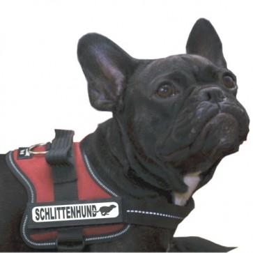 Schlittenhund Klettlogo